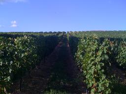 Vines At Chateau For Rental